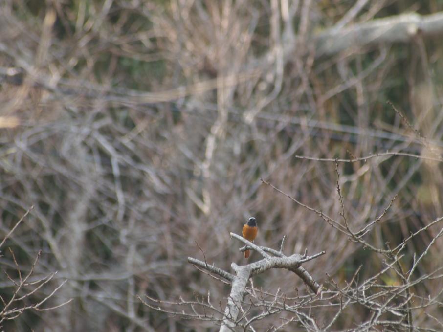 SIGMA70-300mm 起きてる鳥では厳しい